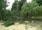 Под Харьковом женщина умерла в результате падения дерева
