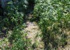 Около 3 килограммов марихуаны и плантацию наркорастений изъяли полицейские в Харьковской области