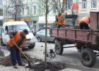 В городе высадили 23 тысячи деревьев