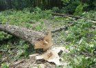 Украина заплатит харьковчанам, защищавшим парк против вырубки, по 25 тысяч евро