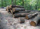 Полицией расследуется факт вырубки деревьев в Харьковской области