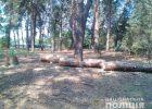 В Харьковском районе полицейские задержали троих мужчин за незаконную вырубку леса