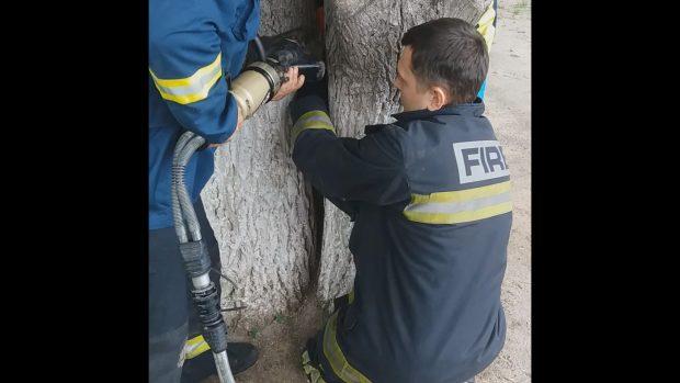 На Салтовке спасатели освободили ребенка, который застрял между двумя деревьями