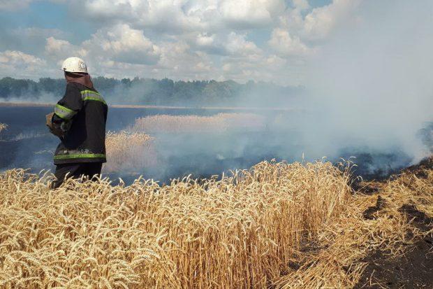 Под Харьковом горело поле пшеницы