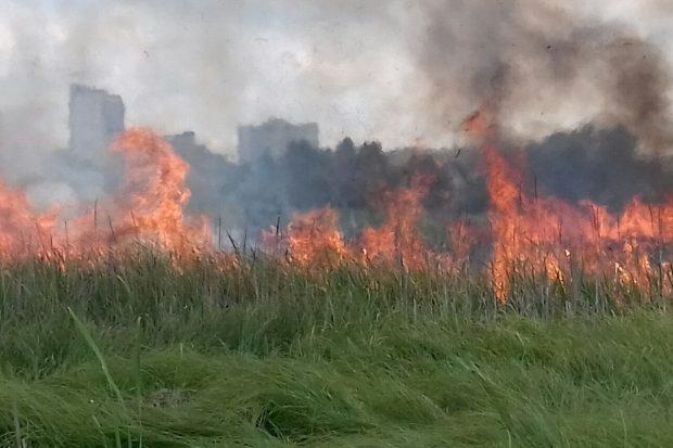 На Салтовке спасатели более трех часов тушат крупный пожар возле частного сектора