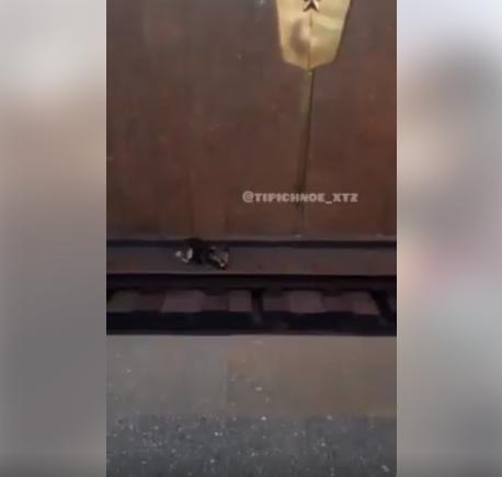 На станции метро «Армейская» из-за собаки остановили поезд