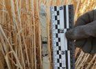 Под Харьковом во время сбора урожая на поле обнаружили самодельное пиротехническое устройство