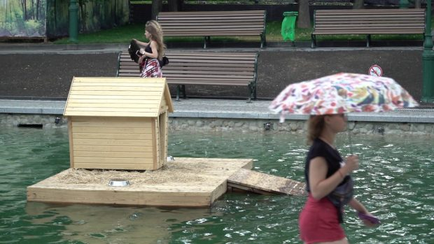 Купания в озере и попытки похитить лебедей: в мэрии рассказали о хулиганстве в саду Шевченко