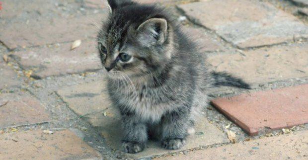 В части Киевского района введен карантин из-за бешенства котенка