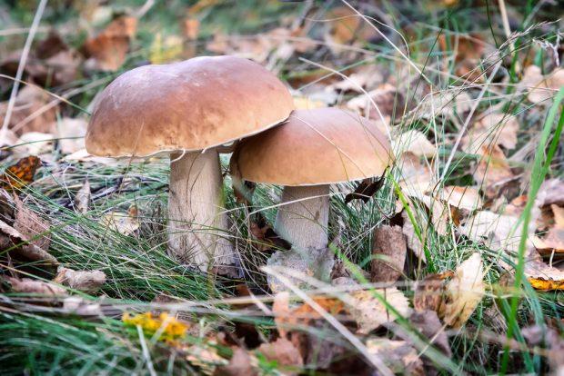 Под Харьковом ребенок ушел гулять, наелся в лесу грибов и попал в больницу с отравлением