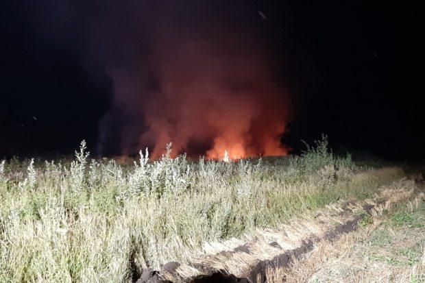 Из-за выжигания стерни пострадал лесной массив в Харьковской области