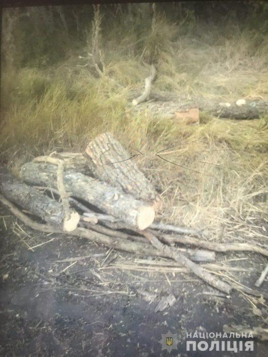 Полицейские продолжают выявлять факты незаконной порубки леса в Харьковской области