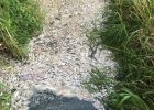 Низкий уровень кислорода в воде: экологи назвали причину массового мора рыбы на Новой Баварии