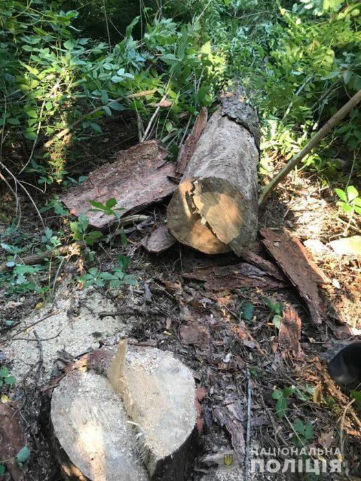 Харьковские следователи направили в суд обвинительный акт в отношении женщины за организацию незаконной порубки древесины