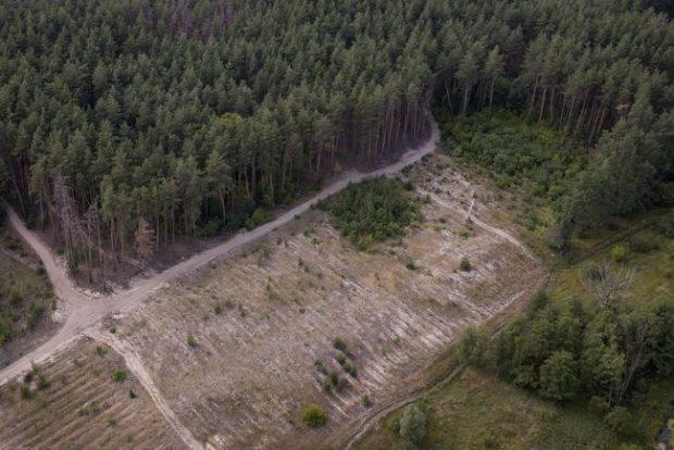 Вырубка лесов в Харьковской области