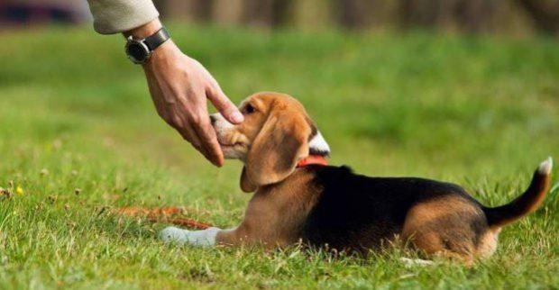 В Центре обращения с животными стартует набор в Школу волонтеров