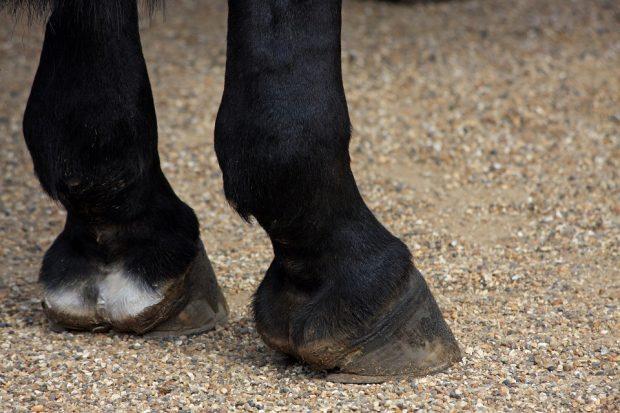 Под Харьковом погибла девочка, привязавшая себя к лошади