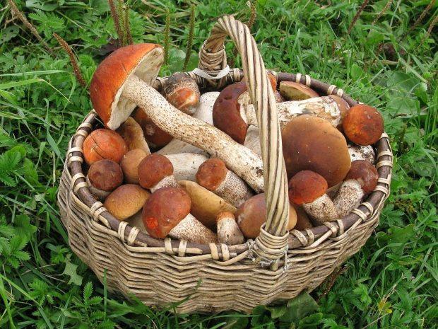 Корзина грибов