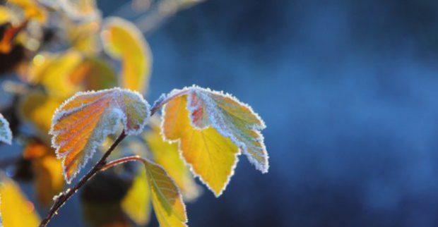 Завтра в Харькове – до 17 тепла