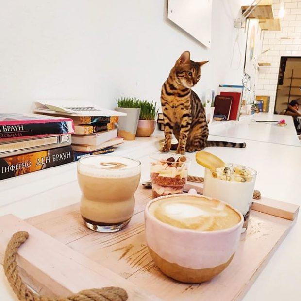 Cats&Coffee