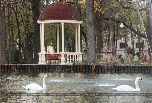 Лебедей из парка Горького переселили на зимовку в зоопарк