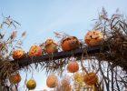 ЗомбиFest, конкурс тыкв и костюмов - в парке Горького отпразднуют Хэллоуин