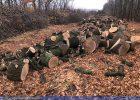 В Харьковской области СБУ задержала подозреваемых в незаконной вырубке деревьев