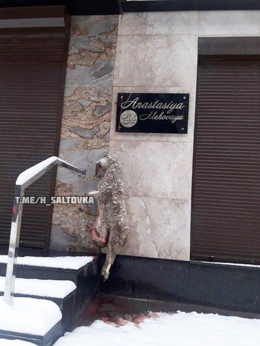 В Харькова у дверей бутика повесили выпотрошенный труп овцы