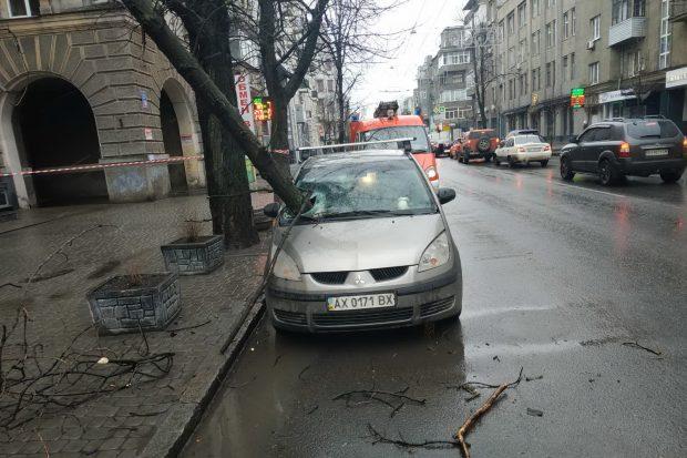 В центре Харькова дерево проткнуло лобовое стекло автомобиля