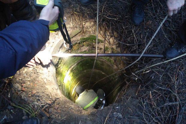 Под Харьковом спасатели 40 минут вытаскивали теленка из ямы