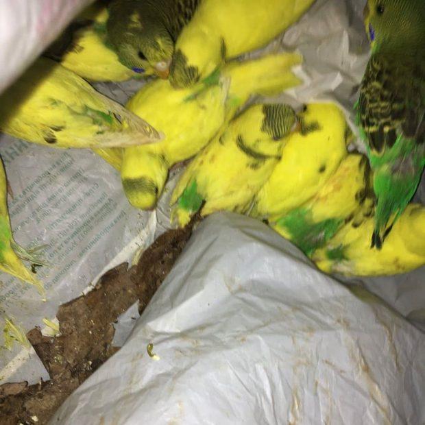 В Харькове в лесу нашли около пятидесяти попугаев