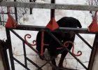 Под Харьковом собака насмерть загрызла маленького ребенка