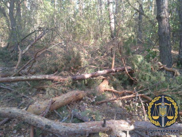 Три года тюрьмы дали мужчине, который вырубал лес в Национальном природном парке «Слобожанский»