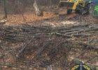 Харьковчан подозревают в незаконной вырубке деревьев на 400 тысяч гривен