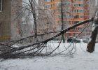В Харькове из-за непогоды упало более десятка деревьев
