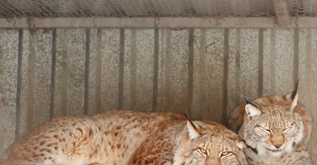 В Харьковском зоопарке рассказали о любви между животными