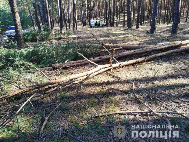 На Харьковщине полицейские выявили факт незаконной вырубки леса