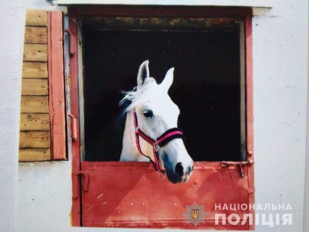 В Харьковской области у женщины украли пять коней