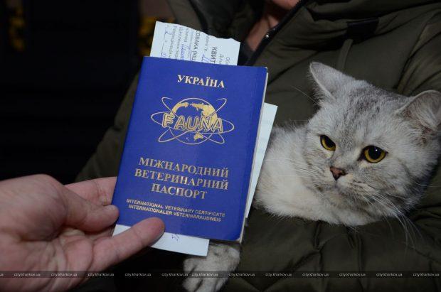 В Харькове началась вакцинация домашних животных против бешенства