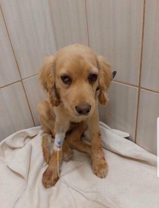 В Харькове мужчина табуреткой избил щенка