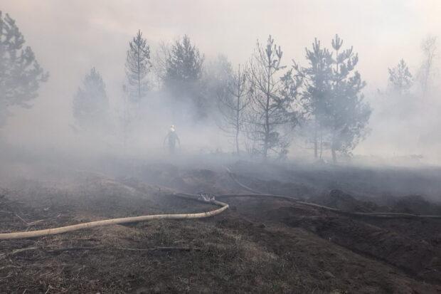 В Харьковской области за сутки случилось два крупных лесных пожара