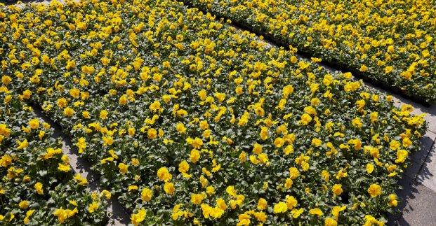 Перед ХНАТОБом высадят 20 тысяч цветов