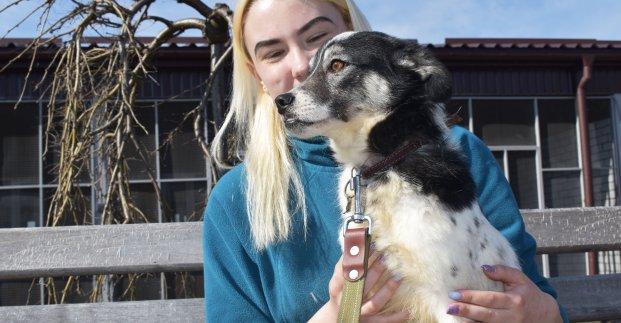 Городской приют для животных не сдает собак в аренду - мэрия