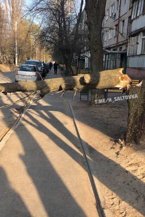 В Харькове из-за непогоды упало около 20 деревьев