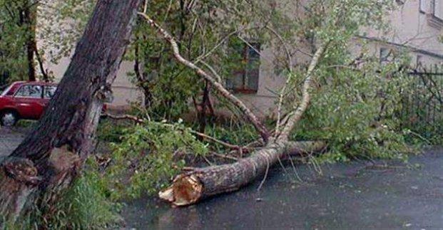 В Харькове из-за непогоды за сутки упало 20 деревьев