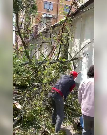 В центре Харькова упало дерево: пострадал мужчина