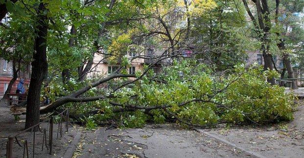 В Харькове из-за штормового ветра упало десять деревьев