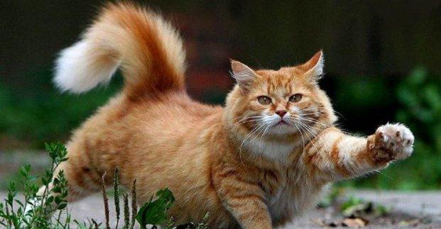 Харьковчанам рекомендуют не выпускать кошек на улицу во время карантина