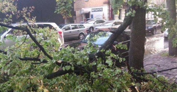 В Харькове дерево упало на контактную сеть