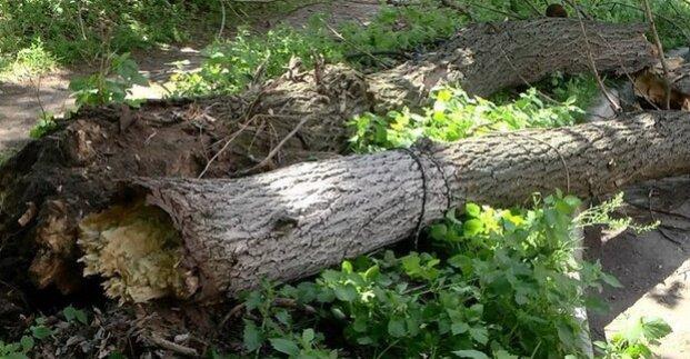 В Харькове из-за непогоды упало около двух десятков деревьев
